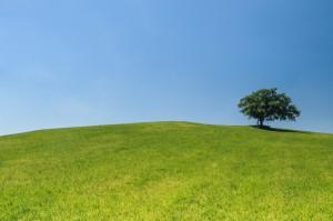 The Warren Meadow